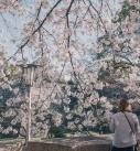 2016年 春、大阪にて。