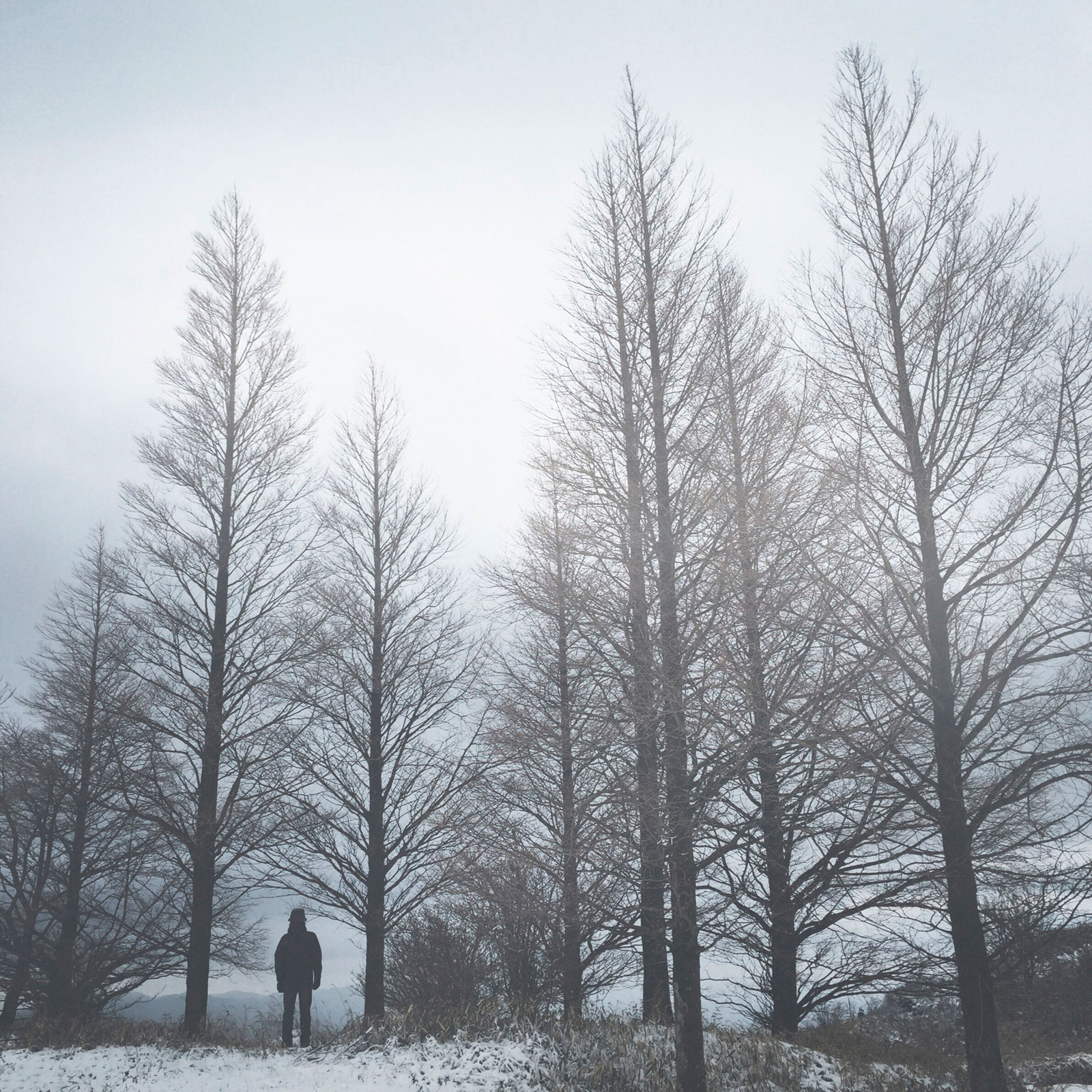 katsuragisan_05_2014.12.06_r