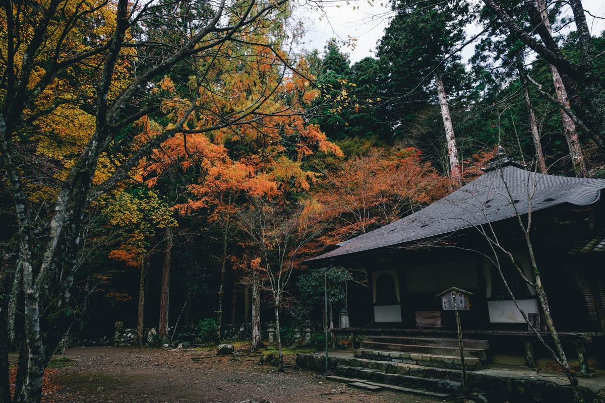 京都 紅葉 場所