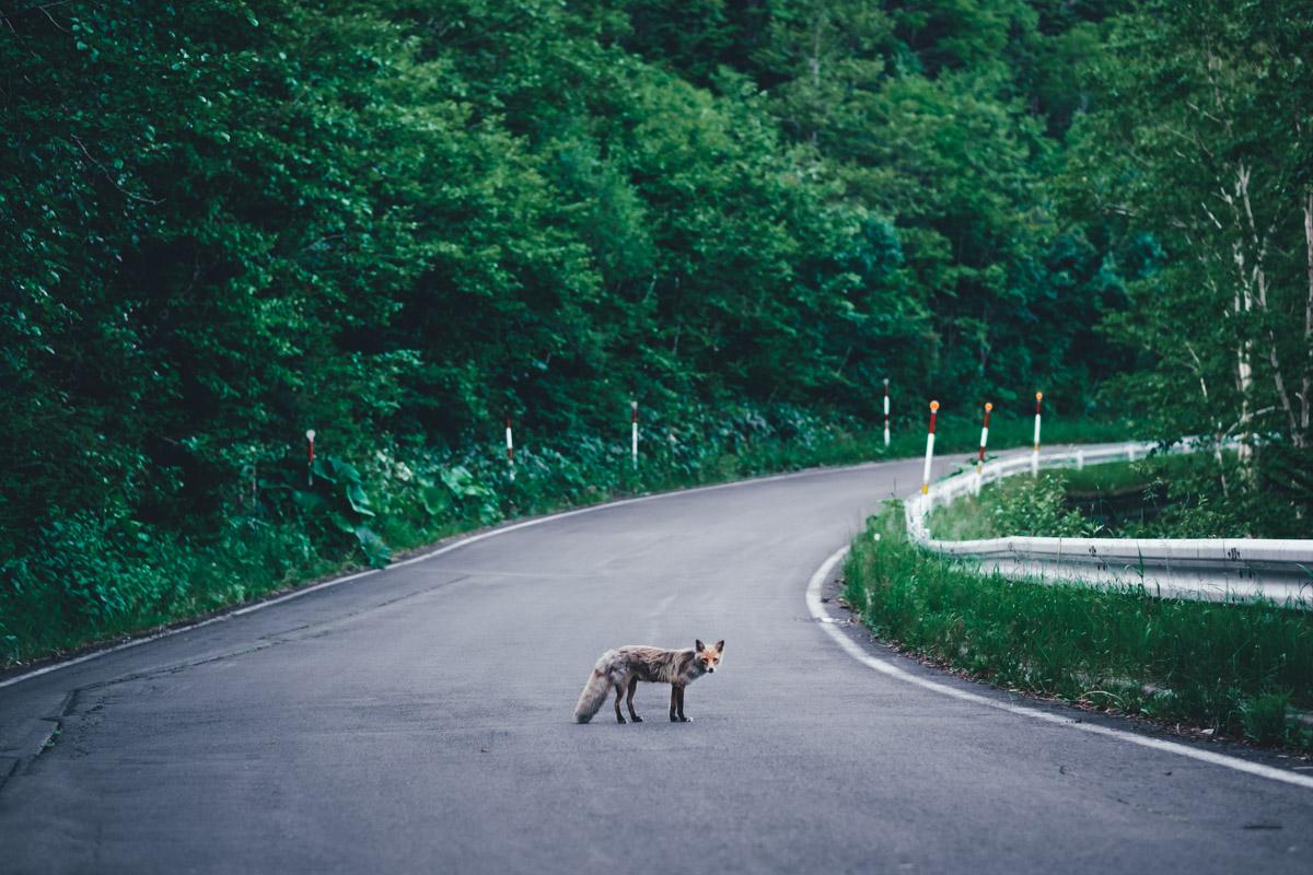 TakashiYasui-Hokkaido-19