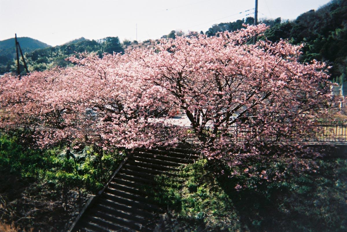 TakashiYasui-FH000019