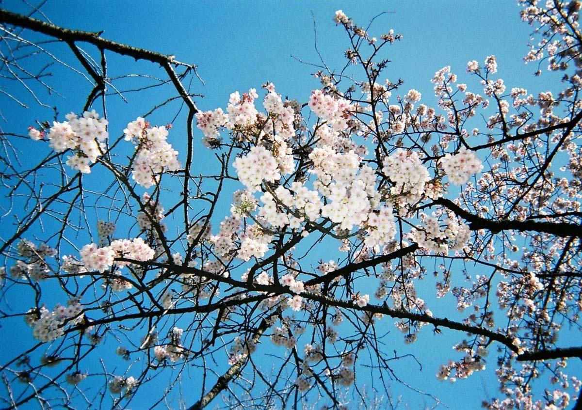 TakashiYasui-FH000048