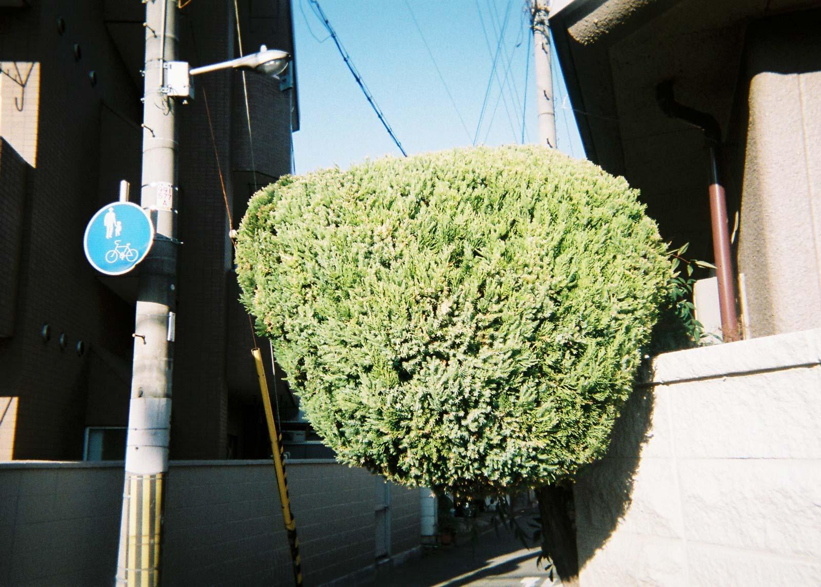 utsuru_mik_snap-001